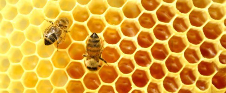 مكونات العسل وفوائدة