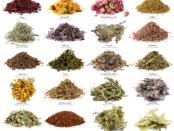 اهمية العلاج بالاعشاب