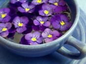 فوائد زهرة البنفسج