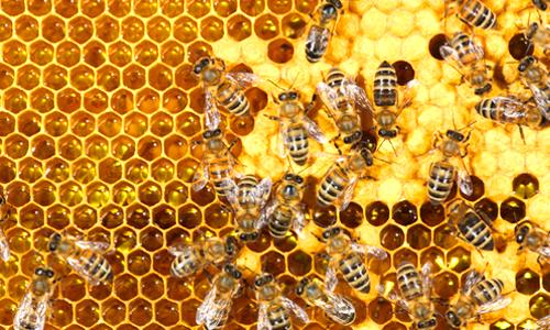 امراض يعالجها عسل النحل