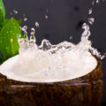 فوائد ماء جوز الهند