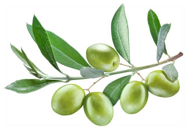 الزيتون benefits-of-olive-le